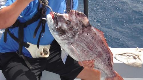Trips sport fishing gran canaria