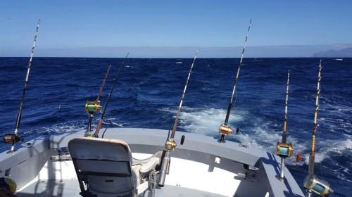 blue marlin charters gran canaria